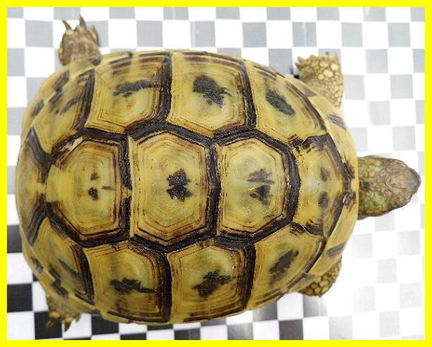schildkröten männchen zusammen halten